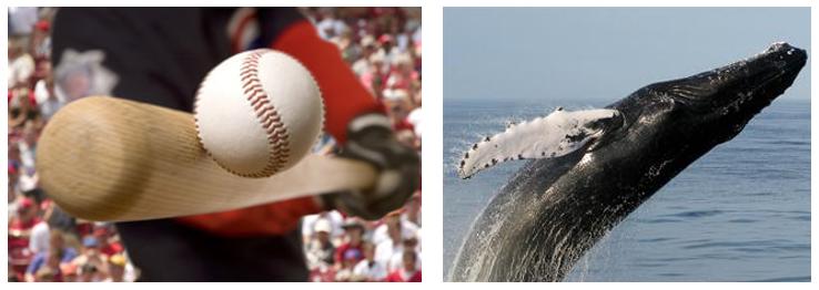 Photos of a Baseball Bat and a Humpback Whale