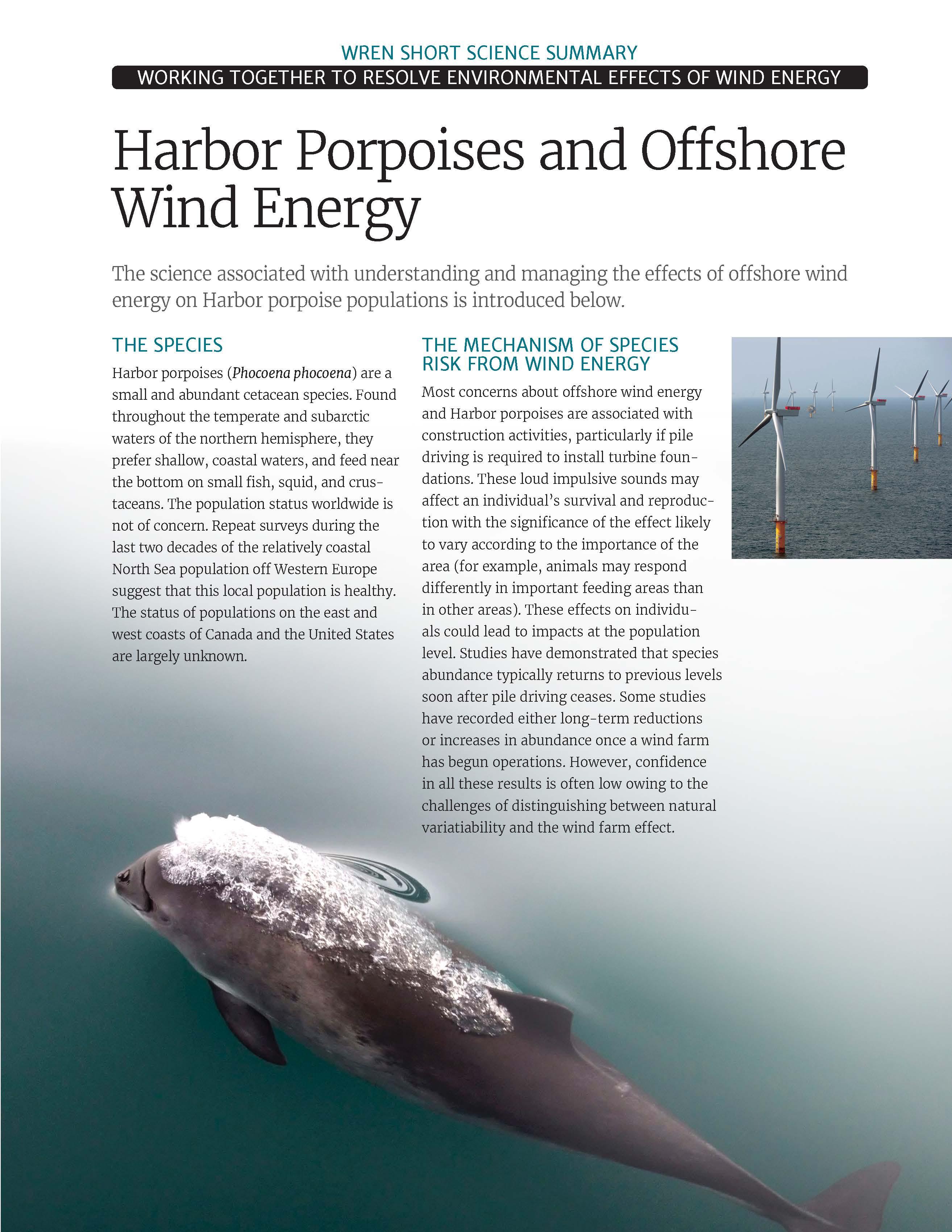Harbor Porpoises Short Science Summary