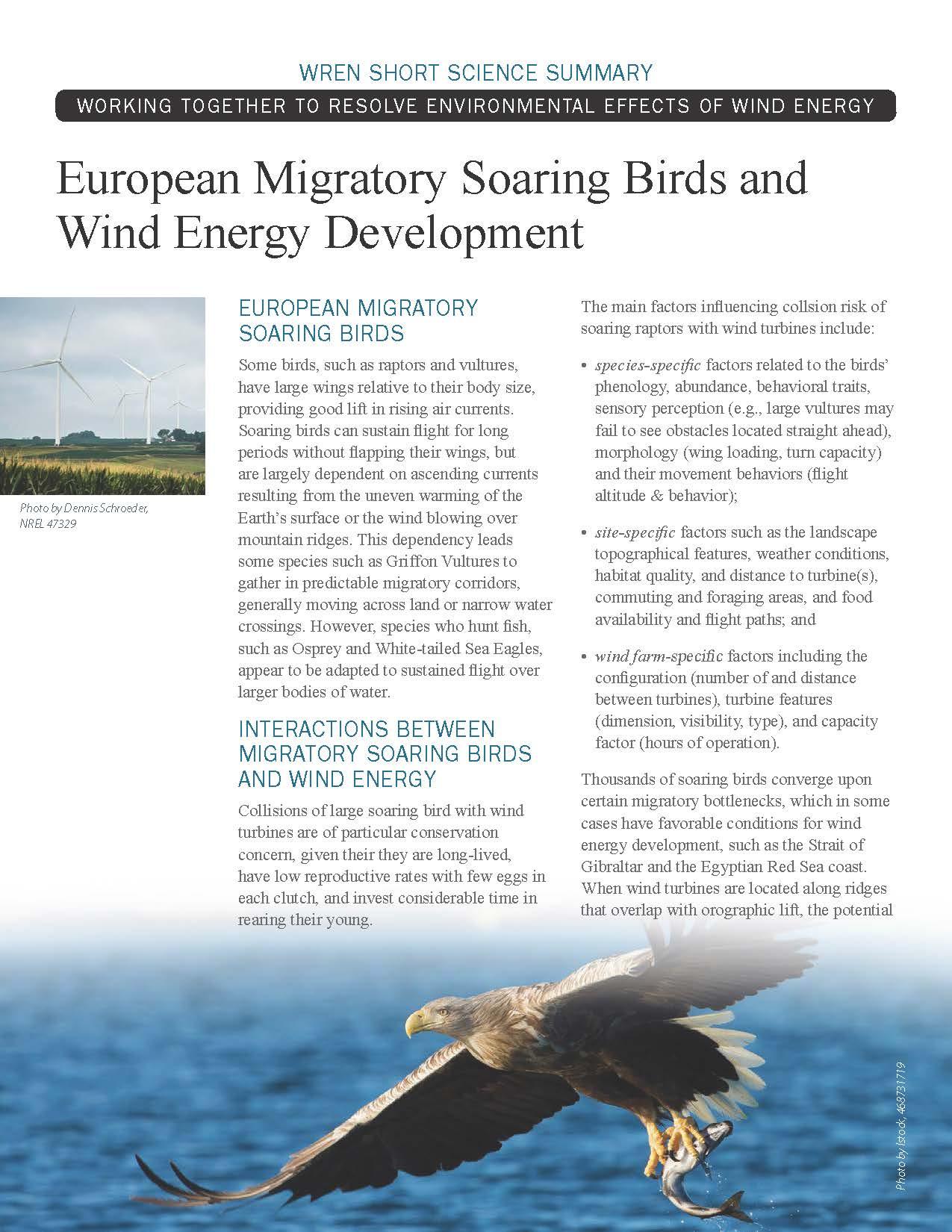 Soaring Birds Short Science Summary
