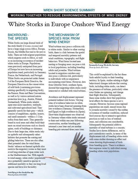 White Stork Short Science Summary