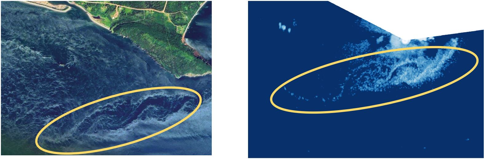 New radar imaging (right panel) reveals spiraling eddies (within yellow ellipse) previously detected via satellite imagery (left panel) in real time, generated during an ebb tide by Cape Sharp in the Minas Passage, Bay of Fundy. Radar-based imaging allows researchers to quantify hydrodynamics so that fish distributions in relation to eddies, wakes and turbulence features can be better understood.  See time-lapse video of radar data in the Minas Passage: https://fundyforcelive.ca/#!/radar